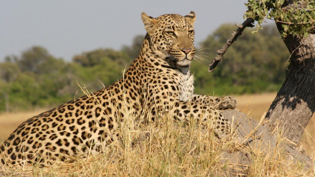 Un restaurant din Africa de Sud a fost vizitat de către un leopard